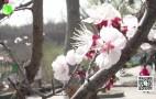 (济南少儿)赏春踏青看萌宝——3月20日济南野生动物世界恢复开园