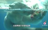 """济南:极地动物消暑有""""凉""""方,看它们如何""""花式避暑"""""""