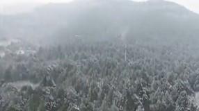 """金鸡独立迎瑞雪 """"雪被""""盖了南山林"""