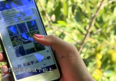 短视频《板栗姑娘》莱芜区委组织部