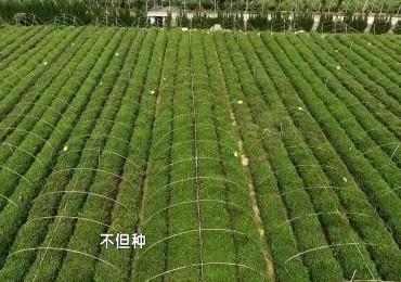 微视频《种茶书记——肖舒荣》长清区委组织部、 济南广播电视台