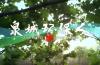 济南市环保局献礼六·五环境日 一首济南环保人自己的歌