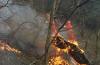 森林防火警示窗 这些教训要吸取
