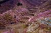 济南南山尽芳菲,锦绣川成粉色鲜花谷