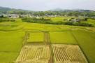 投资93亿元!济南实施农村人居环境整治三年行动