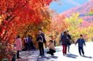 中国红·齐鲁行 红叶谷第21届红叶节启幕