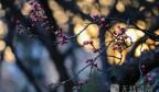 春到泉城 这些花儿美爆了