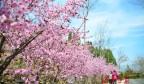 泉城的花儿撑起春天的颜色