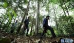 佛顶山:126名生态护林员全部从贫困户中产生