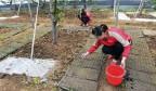 长清五峰樱禧生态园的樱桃熟了