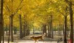 寻找济南美丽秋色:黄河岸边金灿灿 正是赏秋好时节
