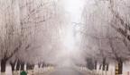 【醉美济南】?#26469;?#20102;!章丘现纯美雾凇景观,美如童话世界!