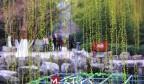 花开、柳绿、鸟鸣、泉涌,漫步济南春天里…
