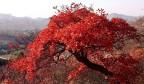 山秋景如画,遇见和庄最美的秋天!