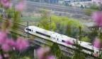 济南列车穿越花海开向春天