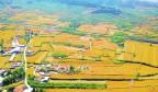 济南:南山金梯田丰收美画卷