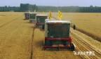 这就是山东|智慧农机助力三夏 长清用上无人驾驶收割机