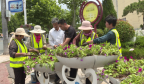 钢城区:打造绿化景观效果 展现城市宜居底蕴