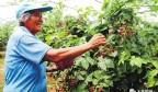 奋力打造乡村振兴新图景——钢城区聚力农业农村,在推进乡村振兴上攻坚突破