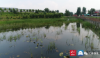 济南市生态环境局钢城分局:聚力生态保护 加快生态之城建设