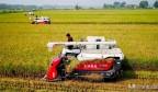 济南五洲农业传承黄河稻米文化,研种优质黄河大米向国庆献礼