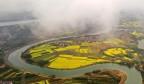 江西泰和:春雨后云雾缭绕 油菜花若隐若现