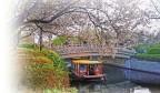 济南近郊开启赏花踏青模式
