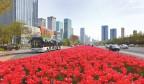 绿化美化提升 泉城姹紫嫣红