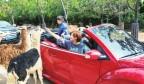 【欢度国庆 文明过节】自驾游火爆野生动物世界
