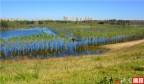 济南重磅发布《济南市黄河流域生态保护和高质量发展规划》