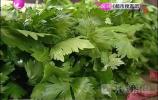 济南市场调查毒死蜱芹菜 随机抽检是否合格?