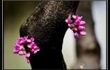 济南的春天:无边光景一时新
