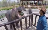 周日录制,《趣味动物城》开始招募家庭啦!