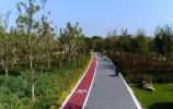 城市提升十大行动   绿化提升 让济南充满绿色更有品质