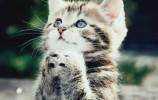 """【视频】打败""""章鱼哥"""",这只猫咪将成世界杯下一任""""预言帝""""?"""
