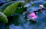 【老济南】老济南明湖采莲,如诗如画济南市旅游发展委员会