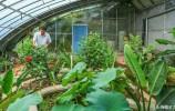 济南有个叫王志鹏的人,流转全村土地搞农业,走出柿子园里的春天