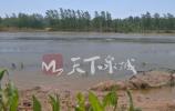 问政|济阳县徒骇河清淤为何不见成效?