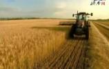 推进新旧动能转换 今年山东将划定5200万亩稻麦功能区