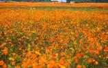 花博盛装等您来!带您一站式了解花博会 景点线路给你规划好了