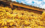 中國農民豐收節 |向農民致敬 為豐收禮贊