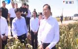 王忠林调研三秋农业生产工作