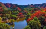 濟南進入秋天模式丨紅葉谷進入最佳觀賞期 俯瞰滿山紅色熱情如火