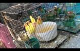 """英雄山鸟市""""死灰复燃""""?记者暗访:三有保护动物仍在售卖"""