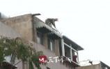 近千平米!二七新村铁路宿舍3区66户楼顶违建开拆!?