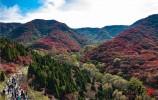 寻找济南美丽秋色:红叶谷层林尽染 漫山红遍醉游人