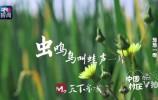 央视纪录片《中国村庄》记录章丘葱乡故事