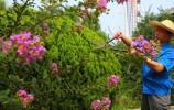 这位大叔用双手守护的园子,全国的美景都能看到...