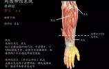 北京协和医院这套神操火了,4个动作让大脑反应更快