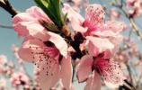 春如四季!转眼春变冬:济南今天最高25℃,明天最低6℃